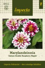 marylandzinnia zahara double raspberry ripple