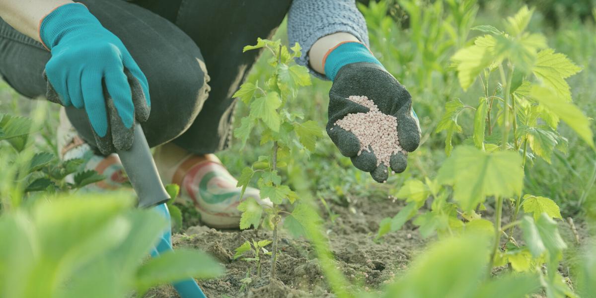 Gödselskola – få koll på trädgårdsgödsel med vår guide